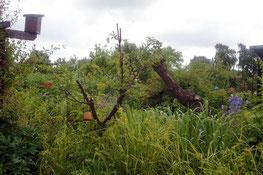 Ein Garten mit Unterschlupf für Tiere