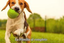 Nuestras Casas de Vacaciones en Santa María de Llorell también admiten mascotas