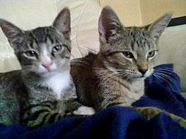 Rico und Nala