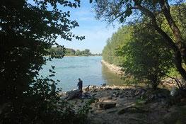Einmündung des Wagbachs in den Rhein