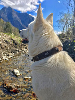LLüti Hunde halsband - vintage Leder, nickelfrei, massiv, Edelweiss, swiss made