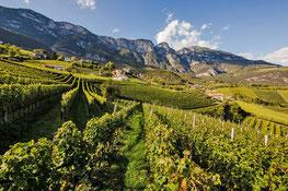 Sauvignon Experience - Penon - Kurtatsch - Penone sulla Strada del Vino, sopra Cortaccia - Gourmet Südtirol