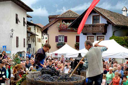 Die letzte Traubenfuhre - L'ultima consegna d'uva - Gourmet Südtirol