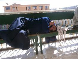 Auch Pinguine schlafen nicht im stehn ;)