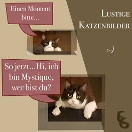 Lustige Katzenbilder von meiner Katze Mystique