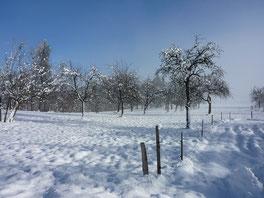 Streuobst Winter Schnaps