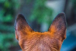 L'éducation positive des chiens : principes, bienfaits et bêtises