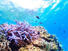 可以潛水,浮潛的沖繩旅遊。觀光景點,好玩又有趣。OKINAWA 青之洞窟。