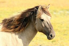 Hypnose Pferde reiten Reiter Sport Angst Hilfe