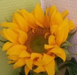 Sonnenblume, der erste Eindruck, wie kann ich den ersten Eindruck ändern, Stereotype, Halo-Effekt, selbsterfüllende Prophezeihung