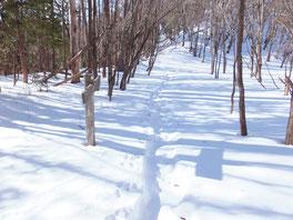 長沢背稜の登山道の様子