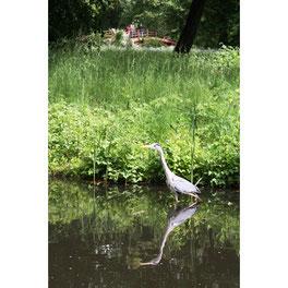 Reiher im Schlosspark Charlottenburg