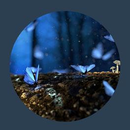 Pourquoi L'Esprit Papillon ?