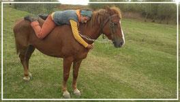 Hier übe ich mich in der Tiefenentspannung mit Pferd- eine Stute aus der Ukraine die ich erst zwei Stunden kannte