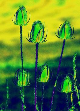 Disteln in Grün mit gelben Hintergrund