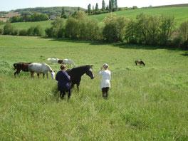 Sandrine Fournier Nature et Sens Agen / Bon Encontre Sophrologie médiation animale communication animale bien être animal soins animaux