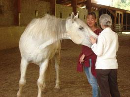Sandrine Fournier Nature et sens, sophrologie, communication animale, soins animaux, médiation animale, fleurs de bach et animaux
