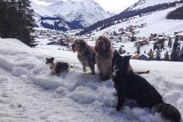 Hunde in Oberstubenbach mit Blick auf Lech, Arlberg