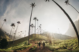 Hiking at the Cocora Valley near Salento