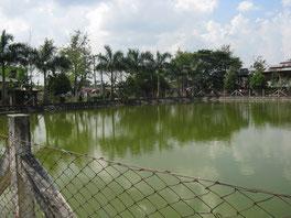 Réserve d'eau pluviale où est pompée l'eau...