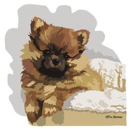 disegno-ddisegno-drawing-ritratto-portrait-cane-dog-digital-art-Princess-Spitz nano Pomerania-Allevamento Apples Angel-Federica e ValentinaMasiero
