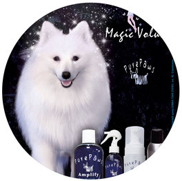 white dogs models for shooting filming Kiev Ukraine; japanese spitz dog model photo video shooting filming; Japanese spitz SIMBA TSAR ZVEREI model; Pure Paws advertising photo amplify line Magic volume; Pure Paws Ukraine photo; Yuliya Strizhkina owner jap