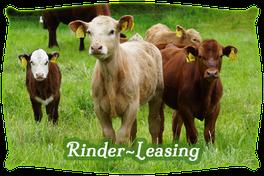 Rinder-Leasing | Mein BioRind