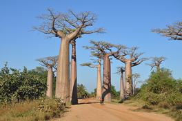 Madagaskars Westen Reise