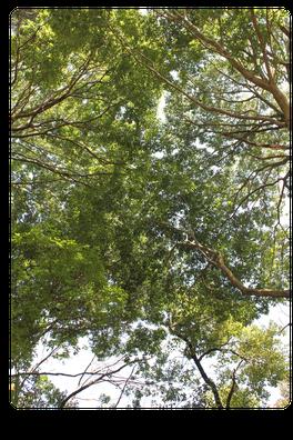 公園の新緑。ココロの奥からのサインを見逃すな!