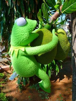 Jackfrucht mit Frosch