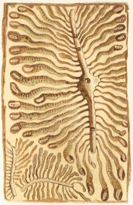 Fraßgänge des Buchdruckers (Fichtenborkenkäfer) (Quelle: Wikipedia, Meyers Konversationslexikon)