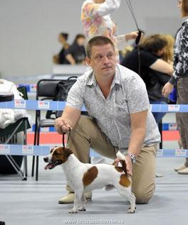 Путь к выставке, или как превратить собаку в Чемпиона