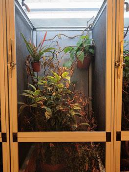 Furcifer petteri terrarium