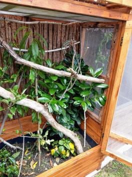 Furcifer pardalis outdoor enclosure