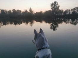Pferdephysiotherapie & Hundephysiotherapie in Limburg / Weilburg
