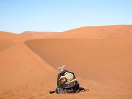 Kasimir, Cäsar und Fredi in Sossuvlei, Namibia