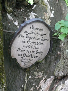 Linde in Heiligenberg - im 12. Jahrhundert diente sie als Gerichtstätte