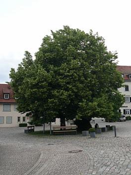 Heiligenberg Sonnenort überm Bodensee - Linzgau