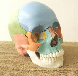 顔面神経痛の原因は頭蓋骨、アゴ、腕のねじれ