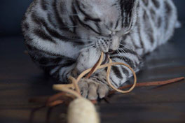 044 - Katzenangel I