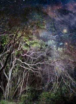 アフリカンツリーエッセンス 落ち着きの木 チェリーウッド