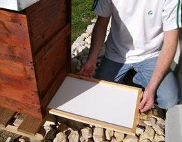 Die Varroaschublade läßt sich ohne Störung der Bienen von hinten in den Gitterboden einschieben