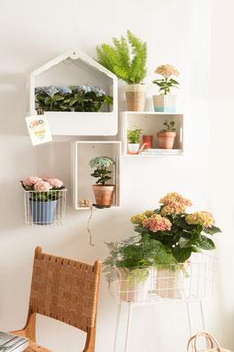 ©Magical Colours Your Home fleurit les intérieurs de maison pendant 150 jours.