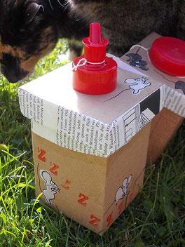 Katze beim genauen Beschau der Boxen