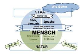 """Organigramm zu Aristoteles: """"Was ist der Mensch"""" (E.M.)"""