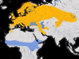 Karte zur Verbreitung des Gartenrotschwanzes (Phoenicurus phoenicurus )