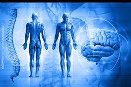 Dr. Gottlob Institut: Ausbildungen und Lehrgänge für Personal Trainer, Physiotherapeuten, Fitnesstrainer, Ärzte und Leistungssportler.