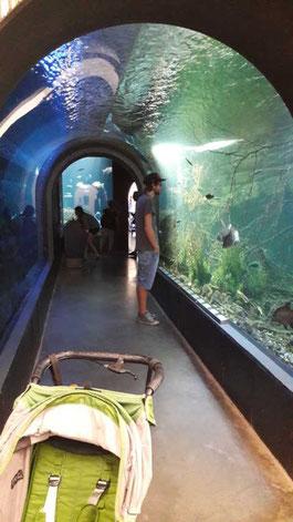 Aquriumtunnel mit heimischer Unterwasserwelt im Tierpark Ulm