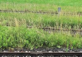 Schhienen, hinter den Geleisen, Bahn
