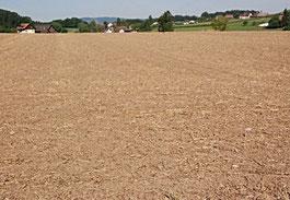 Ernte, Getreide, Feld